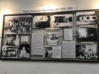 Filipino American agricultural life, 1920-1950.