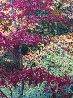More vibrant fall colors.