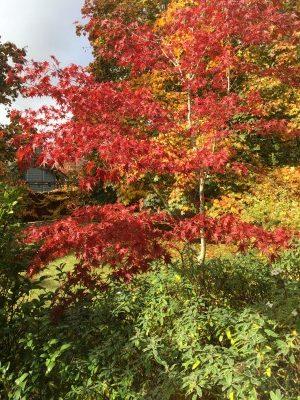 Fall outside my window.